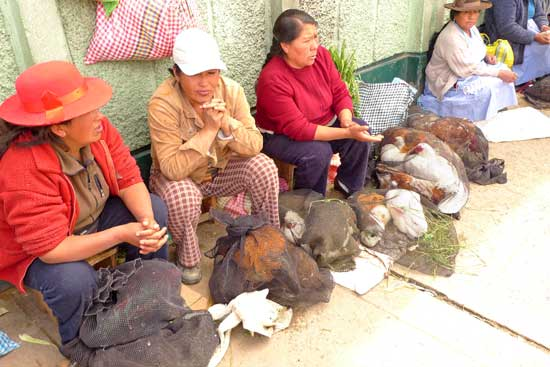 Here is a picture of 3 women selling live chickens, rabbits, and guinea pigs directly outside of my hostal.