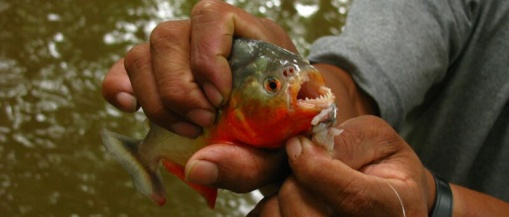 A little piranha fishing is a nice way to fill up some spare time.